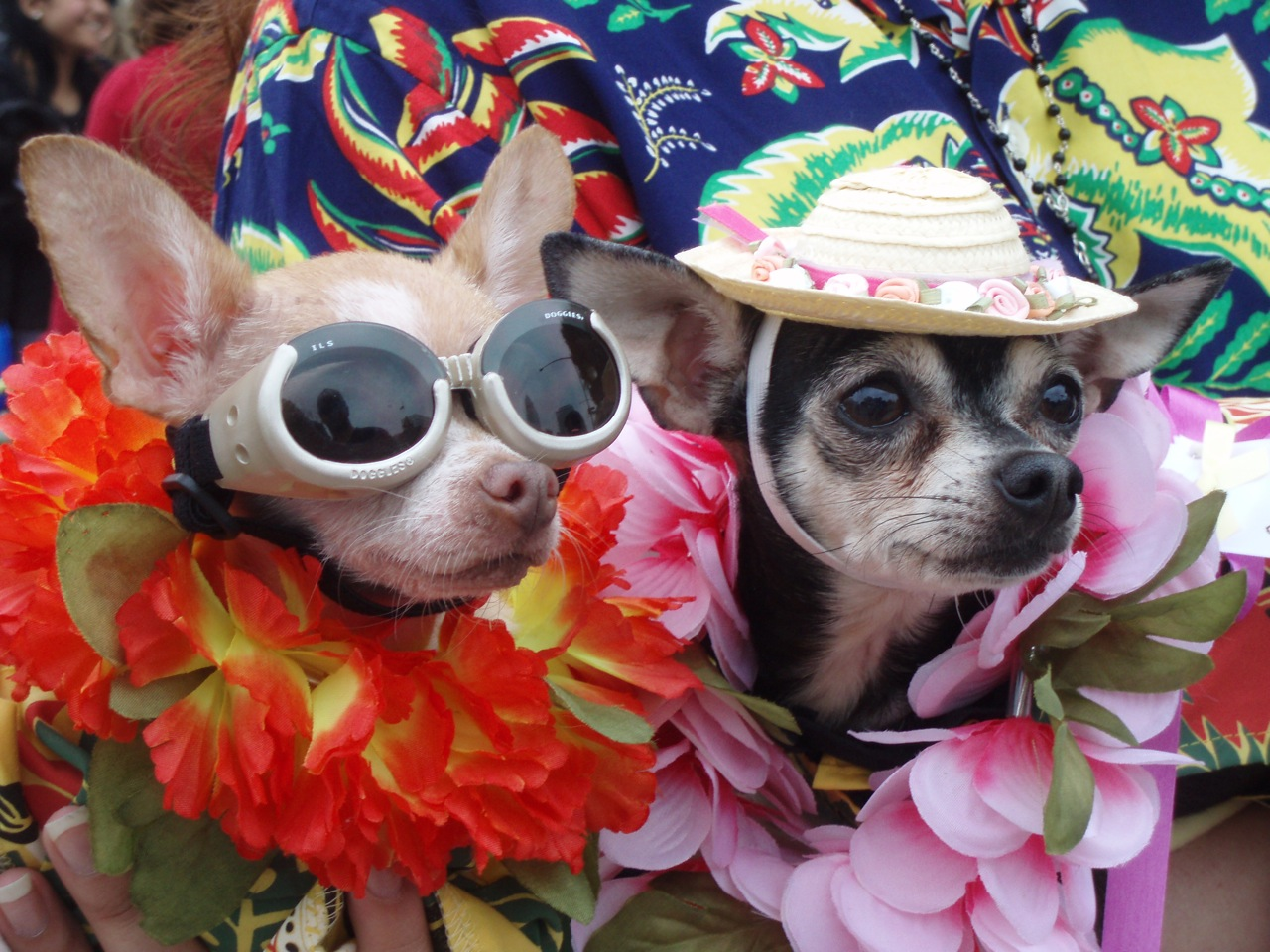 DTLA: 83rd Annual Blessing of the Animals