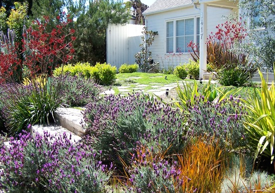 Colorful California natives
