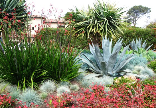Combination garden with natives and cacti